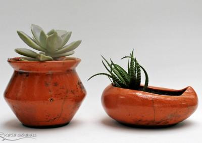 Vasinhos de suculentas.