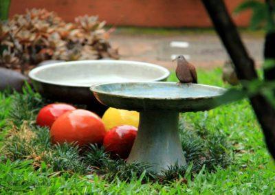 Bebedouros para pássaros no jardim