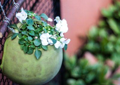 Vasos de parede para flores.